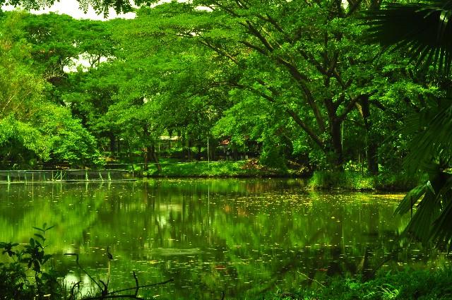 未開の地ジャングル